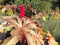 森林公園2004-11-15-6